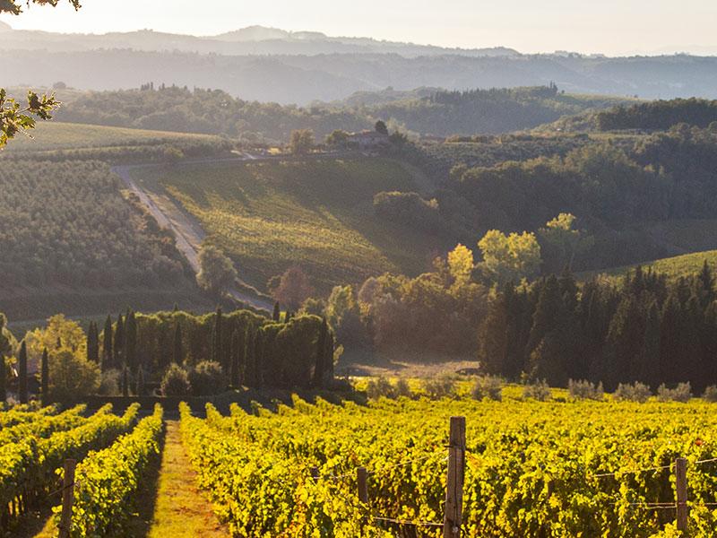 https://www.winelist.nl/media/cache/16x9_thumb/media/image/brand-banner/Banner-groot_Tignanello-vineyard.jpg
