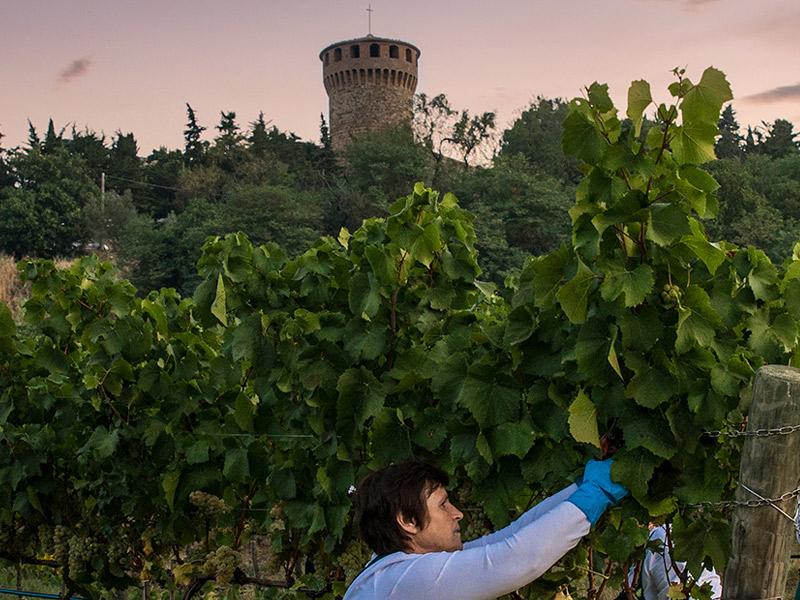 https://www.winelist.nl/media/cache/16x9_thumb/media/image/brand-banner/CastellodellaSala_wijnoogst.jpg