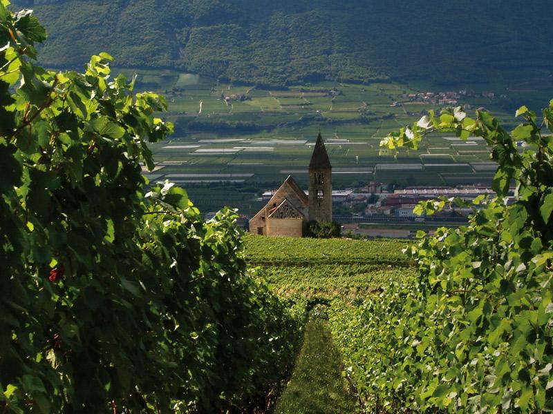 https://www.winelist.nl/media/cache/16x9_thumb/media/image/brand-banner/FranzHaas_wijn.jpg