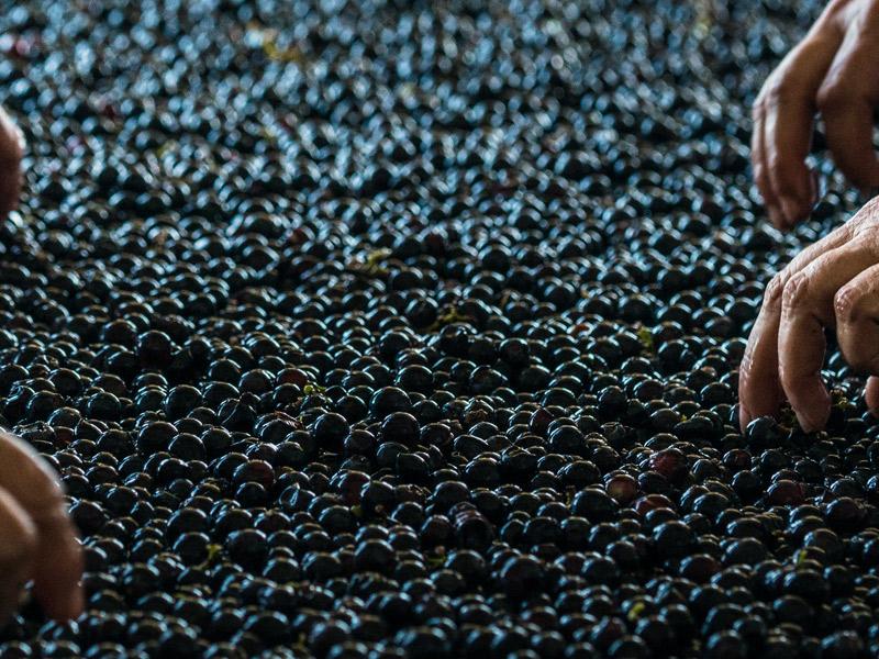 https://www.winelist.nl/media/cache/16x9_thumb/media/image/brand-banner/GuadoalTasso_wijndruif.jpg