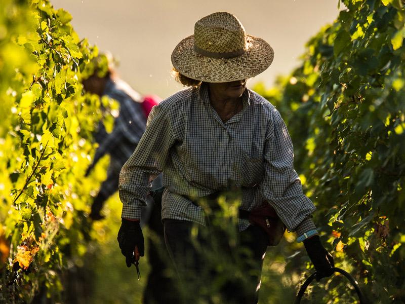 https://www.winelist.nl/media/cache/16x9_thumb/media/image/brand-banner/GuadoalTasso_wijnstruik.jpg