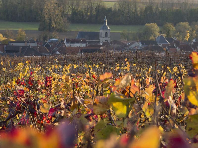 https://www.winelist.nl/media/cache/16x9_thumb/media/image/brand-banner/NicolasFeuillatte_wijnveld.jpg