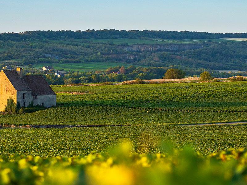 https://www.winelist.nl/media/cache/16x9_thumb/media/image/brand-banner/Olivier_Leflaive_estate_groot_1.jpg