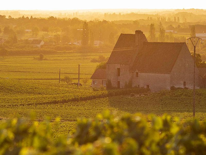 https://www.winelist.nl/media/cache/16x9_thumb/media/image/brand-banner/Olivier_Leflaive_estate_groot_2.jpg