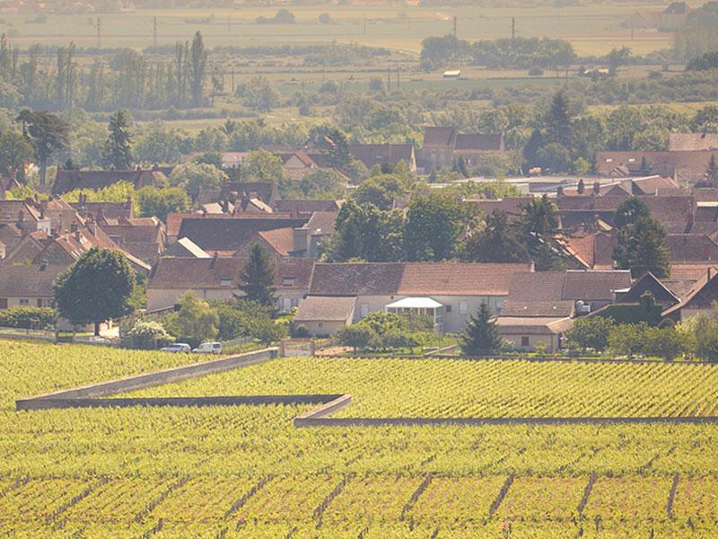 https://www.winelist.nl/media/cache/16x9_thumb/media/image/brand-banner/Olivier_Leflaive_estate_groot_24.jpg