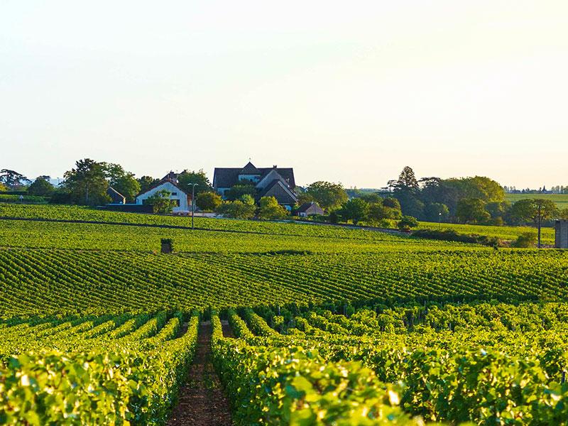 https://www.winelist.nl/media/cache/16x9_thumb/media/image/brand-banner/Olivier_Leflaive_estate_groot_3.jpg