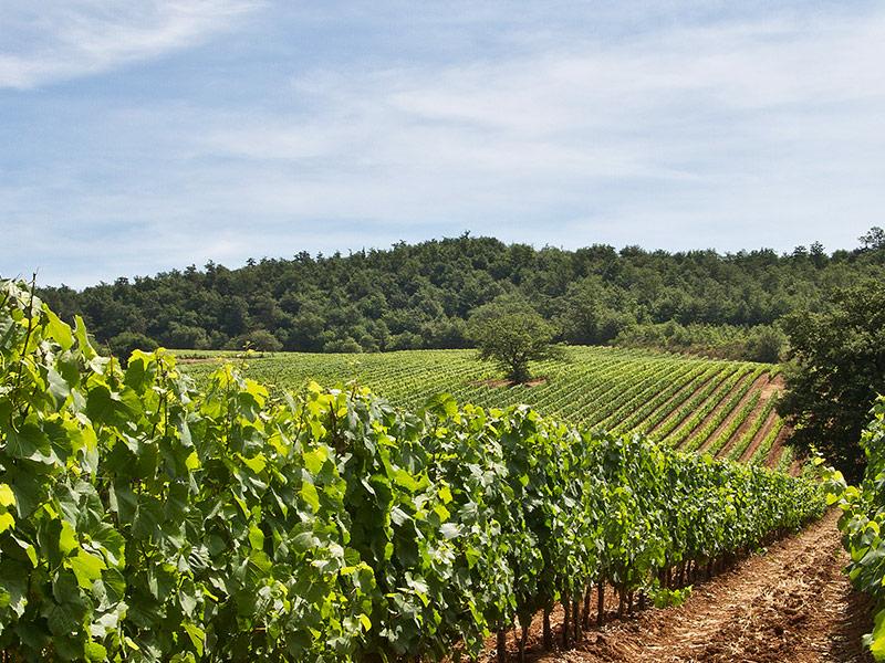 https://www.winelist.nl/media/cache/16x9_thumb/media/image/brand-banner/TENUTA_MONTENISA_wijn.jpg