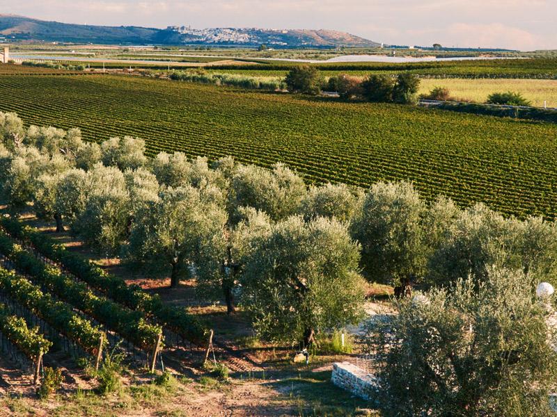 https://www.winelist.nl/media/cache/16x9_thumb/media/image/brand-banner/Tormaresca_winery.jpg