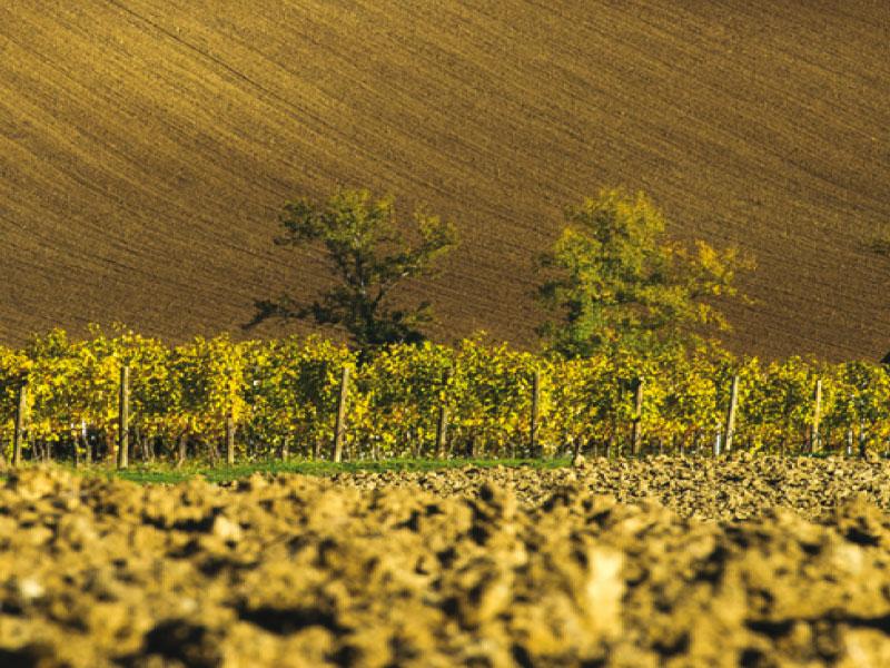 https://www.winelist.nl/media/cache/16x9_thumb/media/image/brand-banner/Umani_Ronchi_banner_groot.jpg