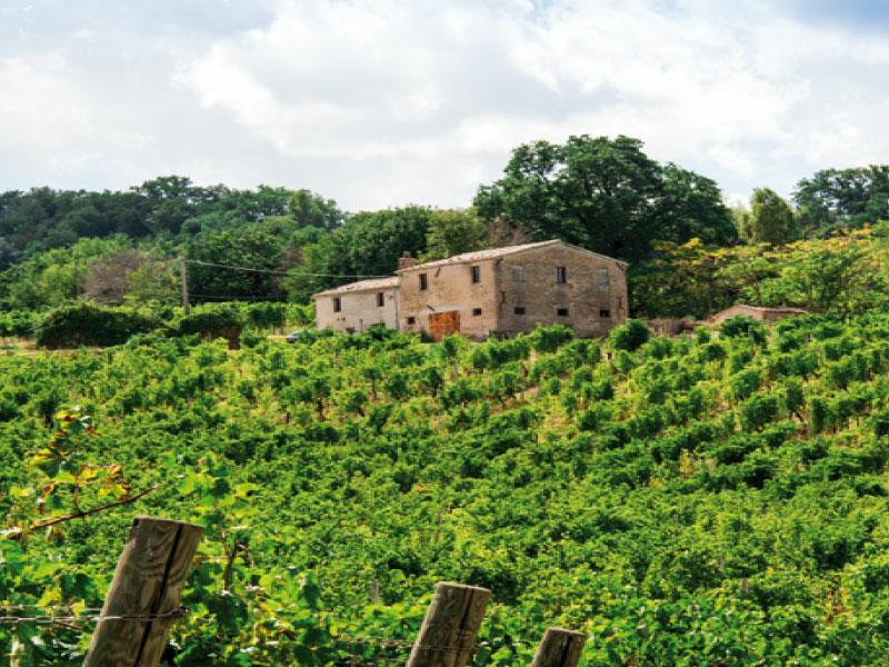 https://www.winelist.nl/media/cache/16x9_thumb/media/image/brand-banner/Umani_Ronchi_banner_groot_estate.jpg