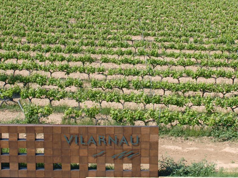 https://www.winelist.nl/media/cache/16x9_thumb/media/image/brand-banner/Vilarnau_druif.jpg