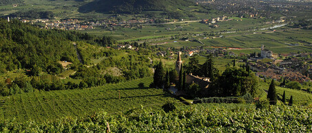 BossiFedrigotti winery