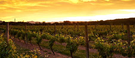JacksonEstate wijnhuis
